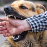 A Guide for Dog Bite Victim – Know How To Get Justice